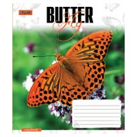 Тетрадь 1 Вересня, А-5, 12л, косая линия,  Butterflys